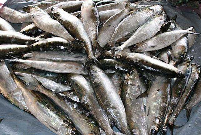Дунайка сельдь дунайская  свежая рыба