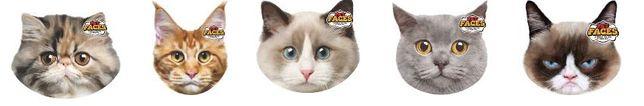 almofada formato gato