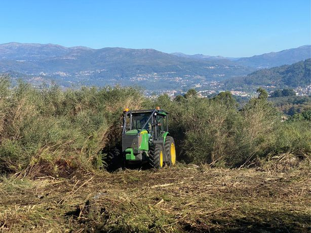 Limpezas florestais  abates de árvores