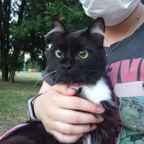 Котенок Тао-Тао самый нереальный красавчик!