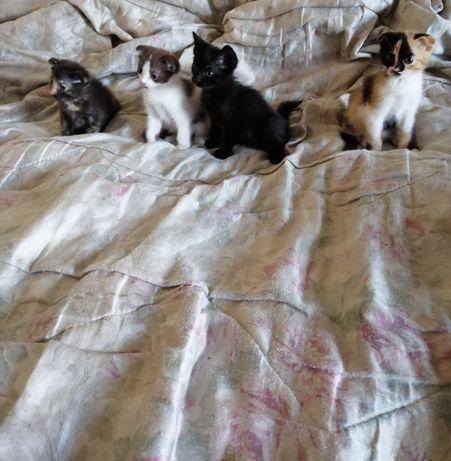 Животные, котята