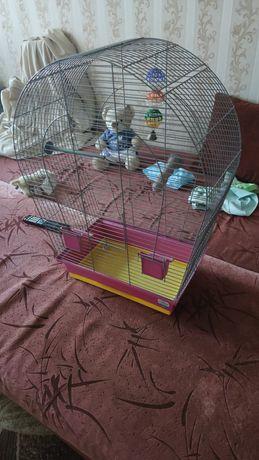 Меняю клетку для попугая, на клетку для кролика либо манеж