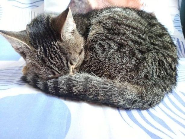 Śliczna młoda kotka szuka domu