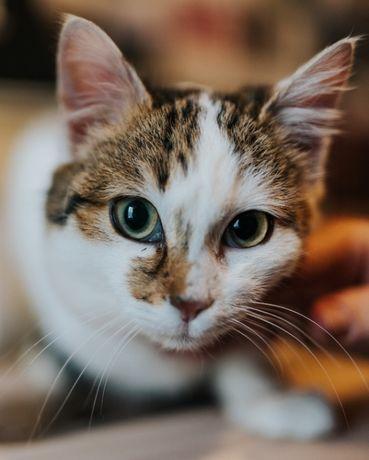 Кошечка Марфа стерилизована кот, кошечка, котята