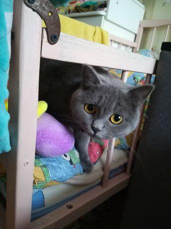 Кошечка. Киця. Молодая кошка