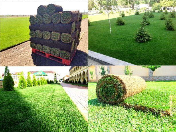 Живая трава в рулонах – газон за 1 день + капельный полив автополив