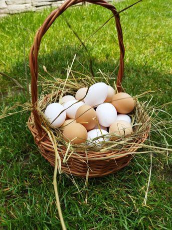 Świeże jaja kury wolny wybieg karmione swoją karmą