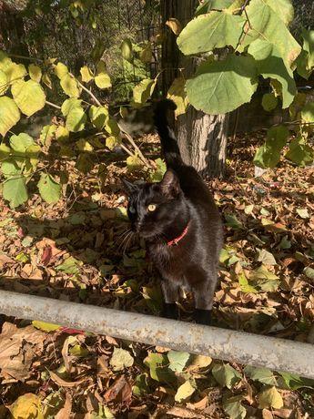 Черные котик на улице народного ополчения