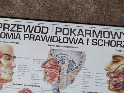 Plakat układ pokarmowy lekarz dietetyk student