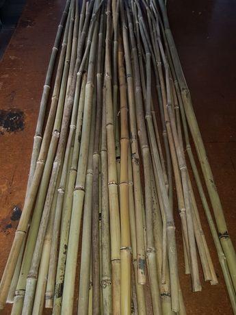 Бамбук. Бамбуковые палки