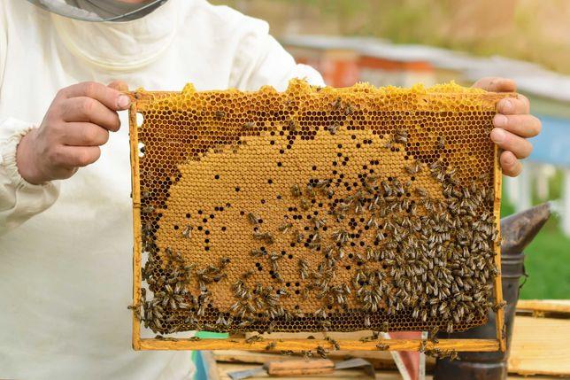 Продам бджоли з власної пасіки.