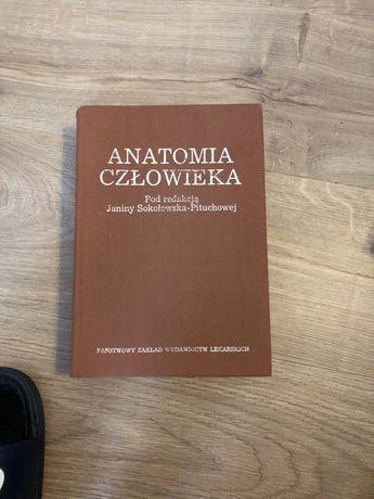 Anatomia czlowieka Pituchodzkiej
