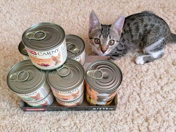 Karma dla kota animonda carny kitten