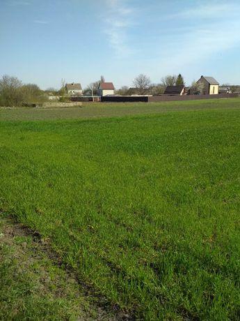 Продам  земельну ділянку в с.Трушки Білоцерківського району.