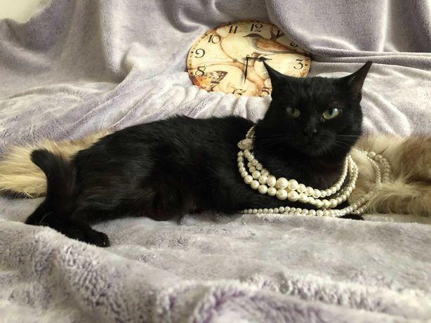 Кошка/киця чорна в добрые руки