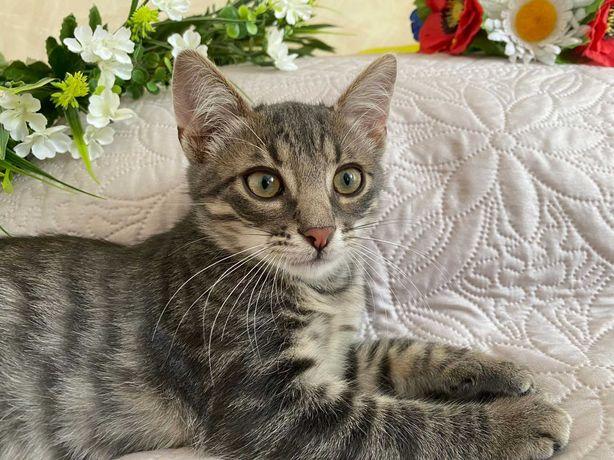 Кошеня/котик/котенок в добрі руки