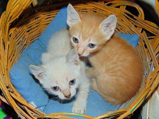 Gatinhos lindos)))