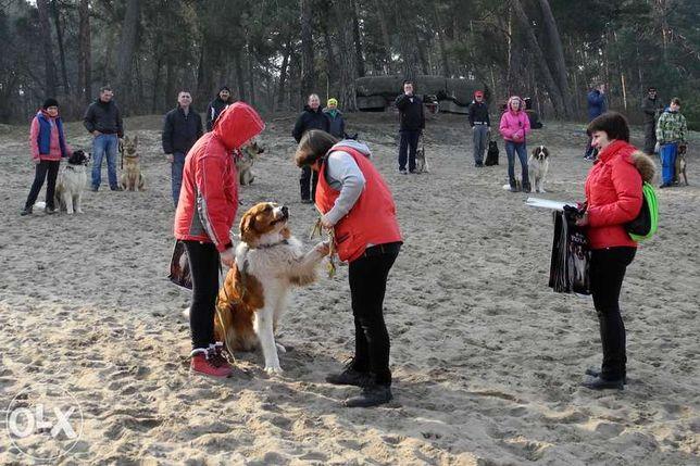 Дрессировка собак - послушание и охрана. Киев, Ирпень, Буча, Гостомель