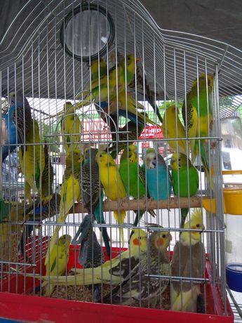 Папугаї різних порід
