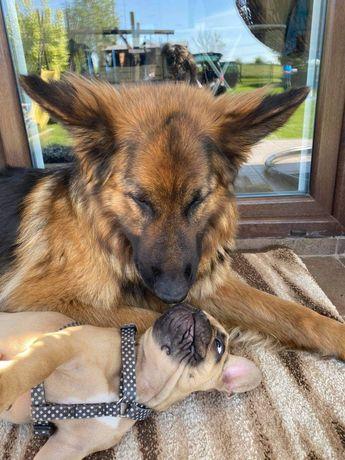 Hotel dla psów z profesjonalną opieką.