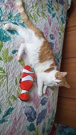Peixe interativo para gato