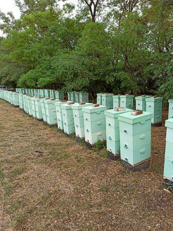 Улей для пчел. 6-8-10рамок из эппс+ дерево