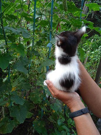Котенок (мальчик, возраст ~3 месяца)