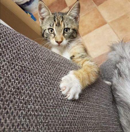 Oddam kotkę za darmo