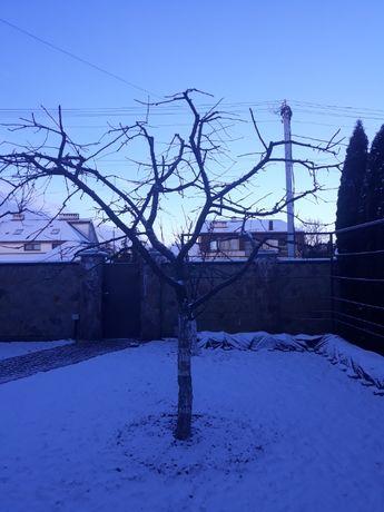 професійна обрізка плодових дерев і кущів