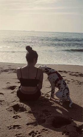 Pet Sitting/ Dog Walking