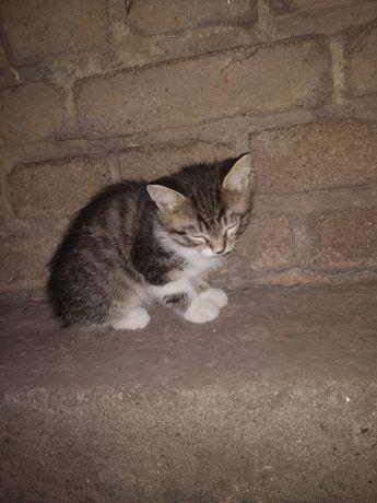 Отдам котёнка в хорошие руки, девочка, красавица ещё та