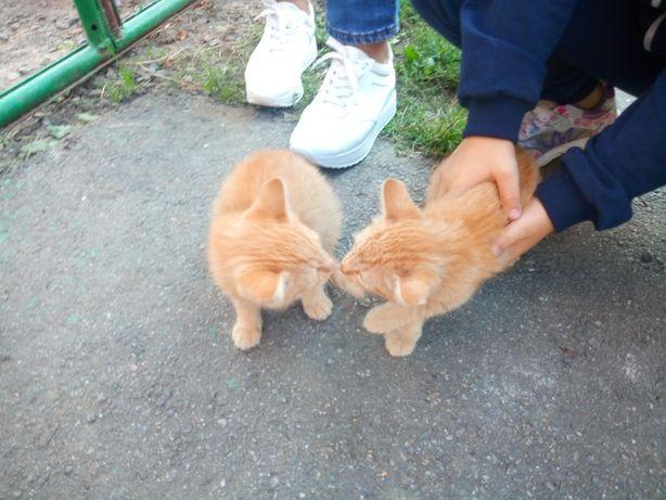 Котята рыжие, мальчик и девочка.