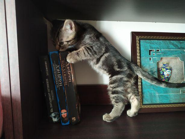 Суперигривый котенок, камышовый мальчик