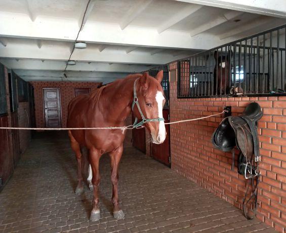 Пойстой, оренда денников для лошадей
