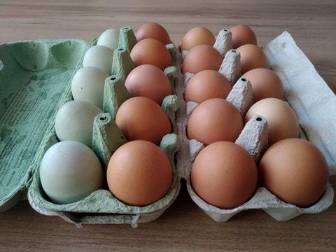 Sprzedaż jaj świeże jaja jajka