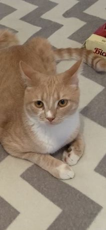 Потерялся мой котик Лёлик