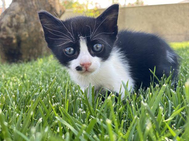 Gato bebé / Gatinho para dar