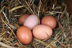 Jajka wiejskie 90gr