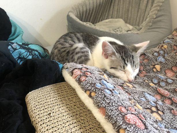Kotek do adopcji