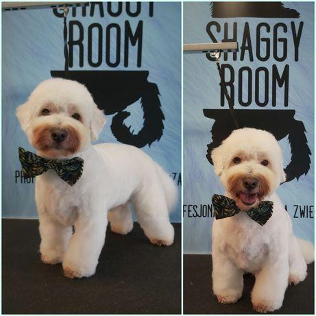 """Psi fryzjer/Fryzjer dla psów i kotów """"Shaggy Room"""" Śródmieście"""