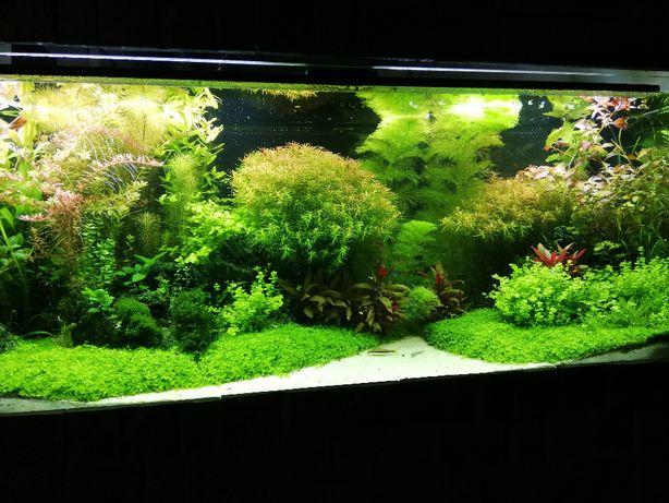 Wielka paka roślin akwariowych