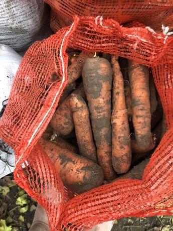 Морква,Бурячок