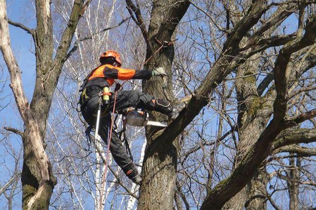 Спил деревьев, арборист