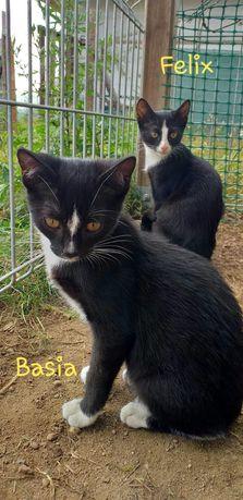 Kotki Basia i Felix do adopcji