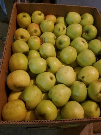 Продаємо яблука опт