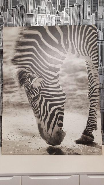 Obraz foto zebra biało-czarny nowoczesny - stan idealny 85x113cm