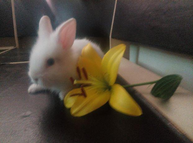 кролики малыши миники