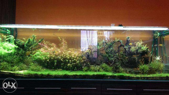 Rośliny do akwarium zamienię krewetki