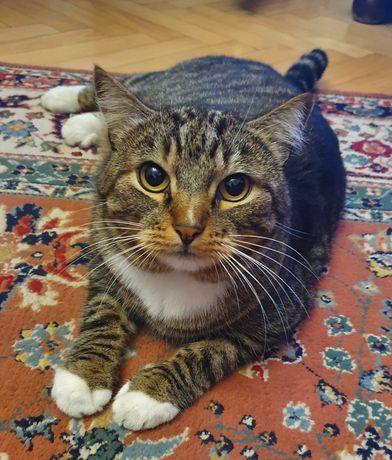 Zaginął Filip kot dzielnica dziesiąta