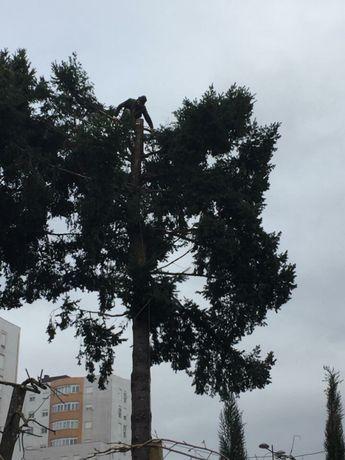 Abate de palmeiras